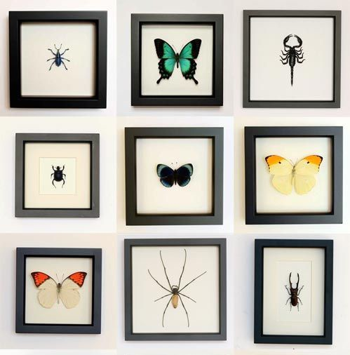 framed-insects